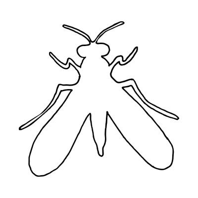Fliege Zeichnung von MitMuster